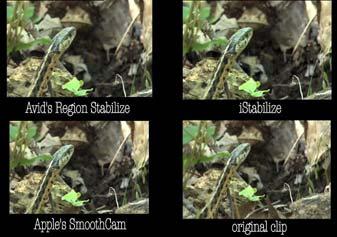 Snake comparison