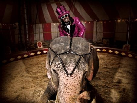 tp_07-elephant_0652.300re