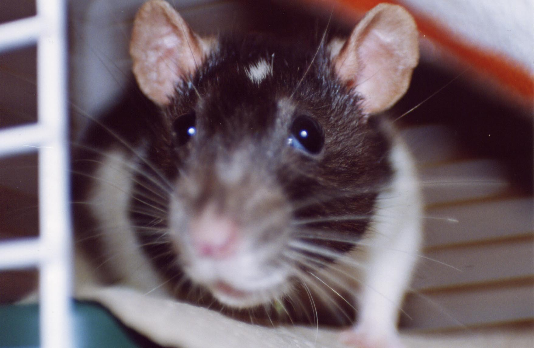 This radio station broadcasts sounds of rats – and it sounds amazing